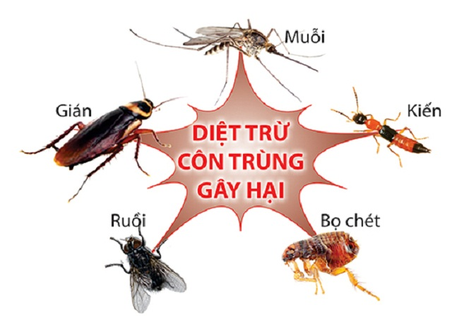 Name:  dich-vu-diet-con-trung-gia-re-2.jpg